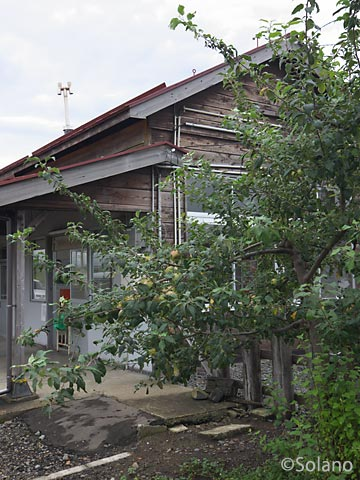 JR五能線・藤崎駅構内、リンゴの木と木造駅舎