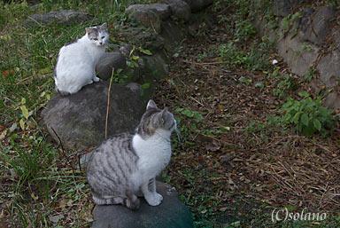 石原町駅の荒れた池庭跡は猫の遊び場に…
