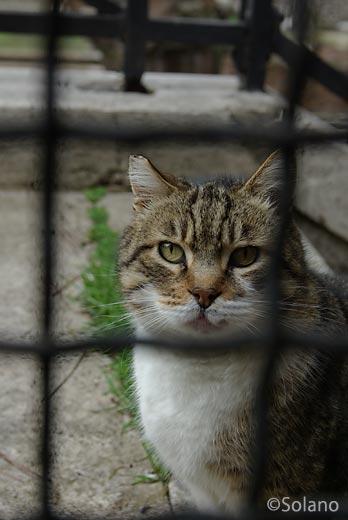 イタリア・ローマ、シェルターで保護されている猫