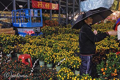香港の年末・大晦日、旧正月前の年宵花市。小さなみかんの木