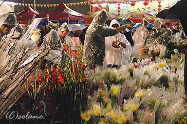 香港の年末・大晦日、旧正月前の年宵花市。露店の花々