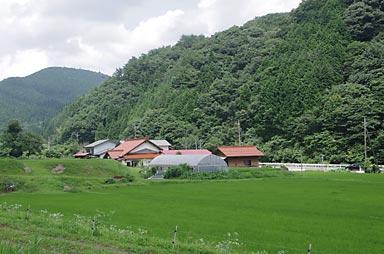 奥出雲おろち号の車窓、緑豊かな山村風景