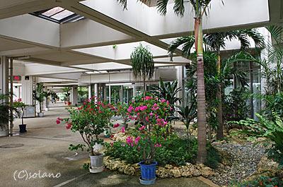 宮古島、南国風の植栽豊かな宮古空港