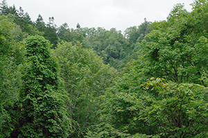 森・桂沢湖・北海道・2009・7・26・15時3分
