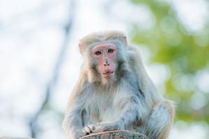 サル・こっちを見る猿・300px・フォトック
