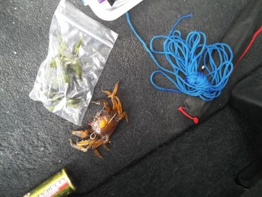 荒崎公園で雑魚釣り (2)