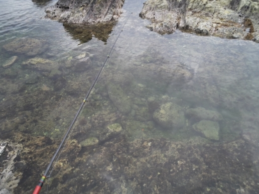 荒崎公園で雑魚釣り (5)