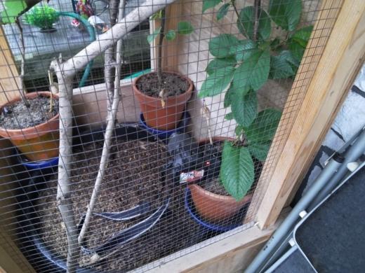 カマキリの孵化 (4)