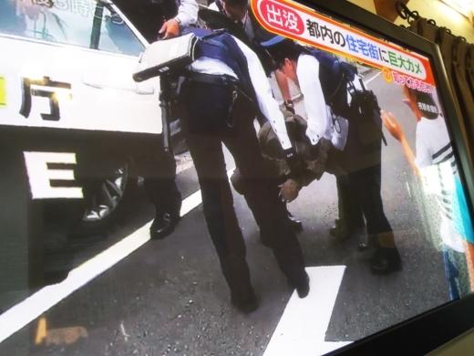 カメ脱走 (1)