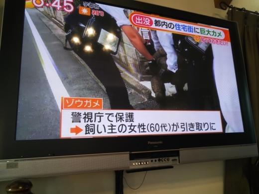 カメ脱走 (3)