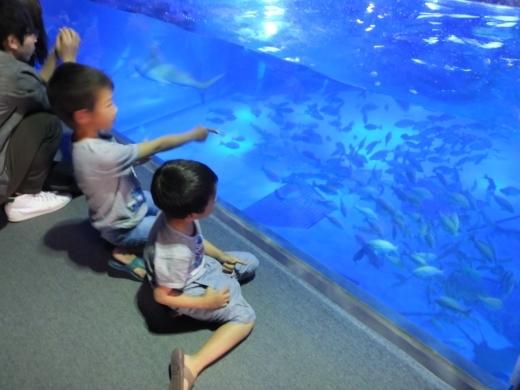 のとじま水族館 (1)