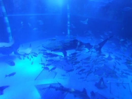 のとじま水族館 (4)