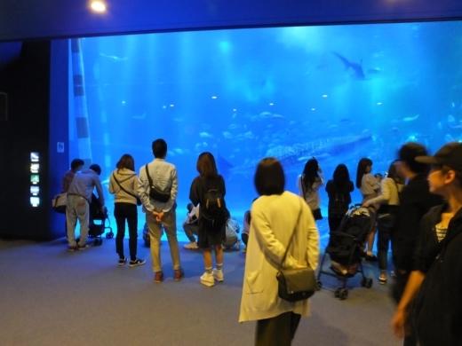 のとじま水族館 (5)
