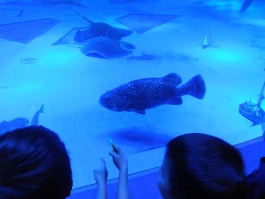 のとじま水族館 (6)