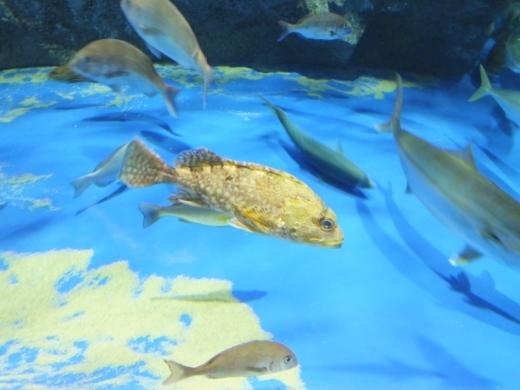 のとじま水族館 (10)