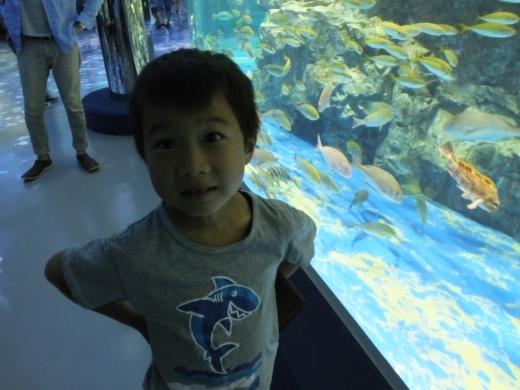 のとじま水族館 (11)