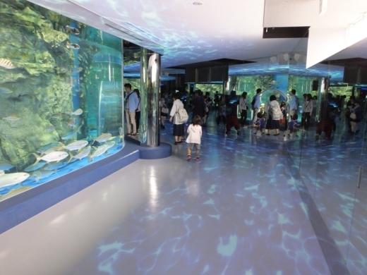 のとじま水族館 (13)