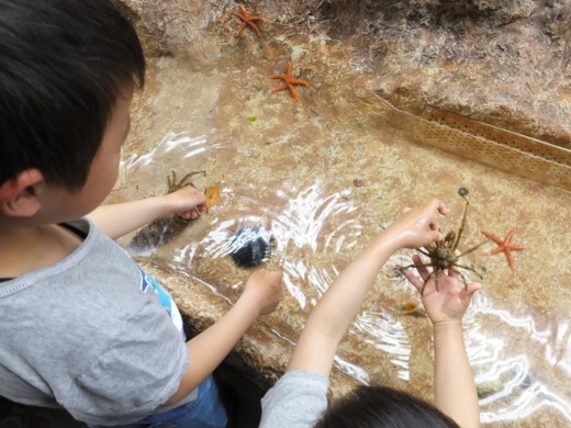 のとじま水族館 (15)