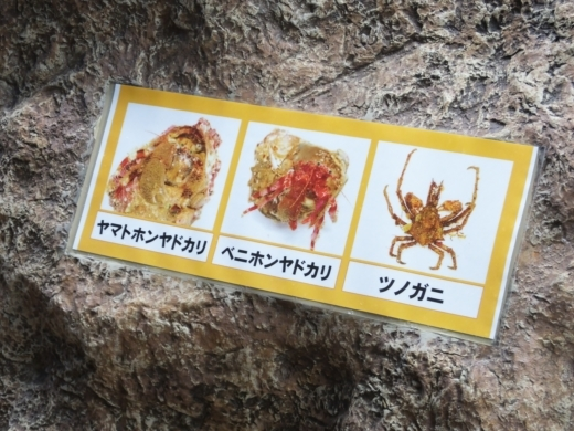 のとじま水族館 (16)