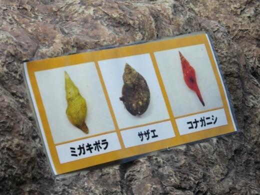 のとじま水族館 (17)
