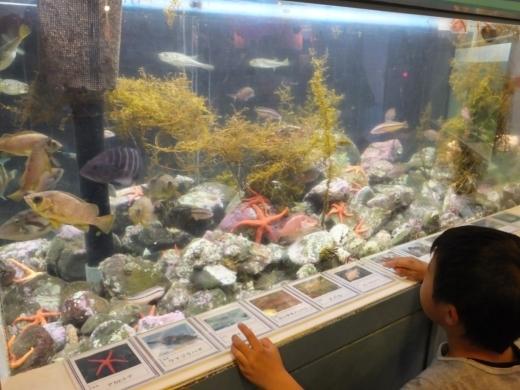 のとじま水族館 (24)