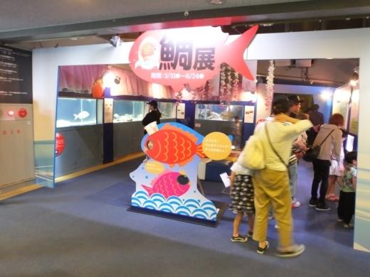 のとじま水族館 (25)