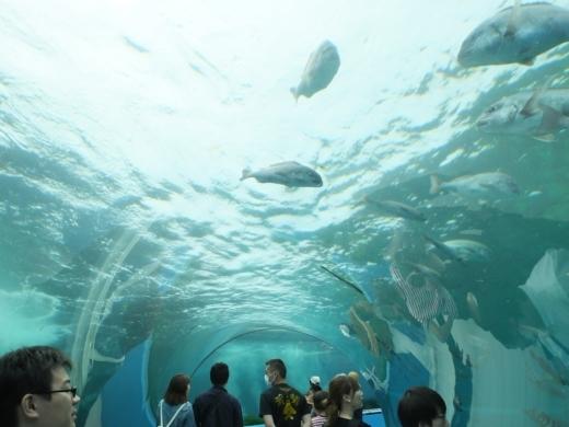 のとじま水族館 (36)