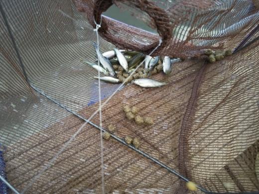 舎人公園で釣り (22)