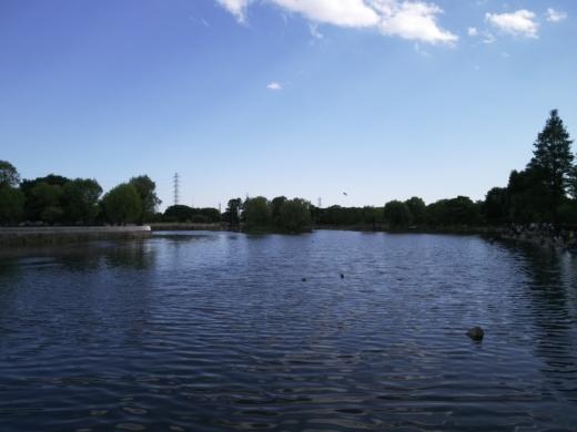 舎人公園で釣り (24)