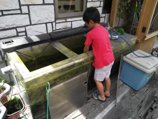 アクアリウム淡水 (3)