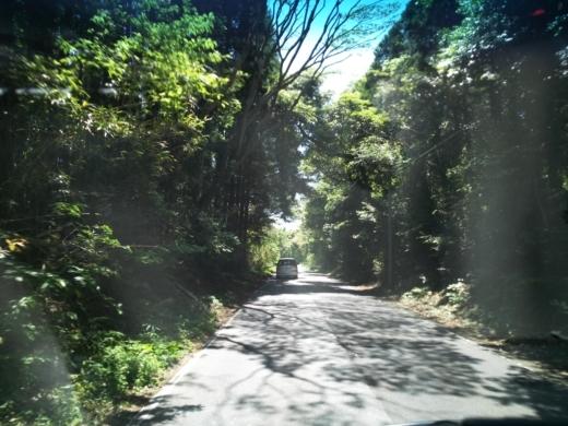 守谷海岸 (11)