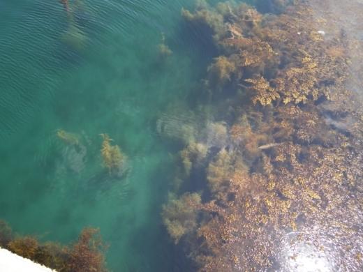 能登島の海 (7)