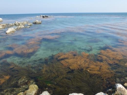 能登島の海 (3)