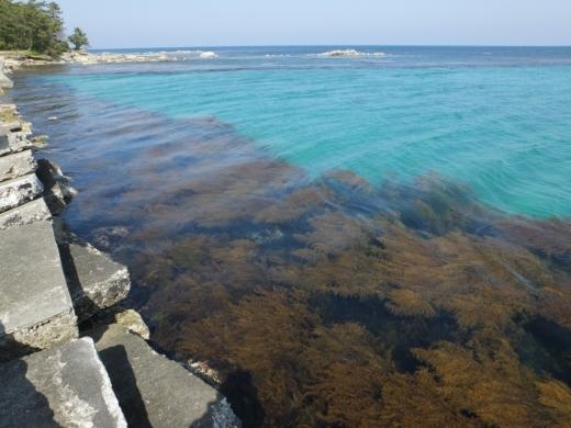 能登島の海 (4)