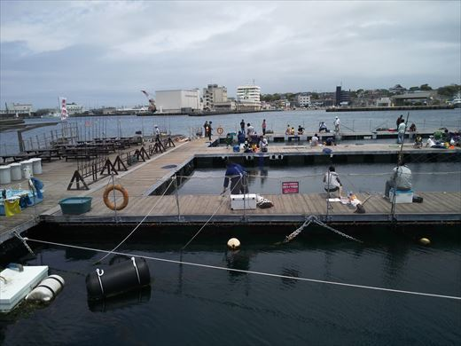 第八回釣り大会城ヶ島 (20)
