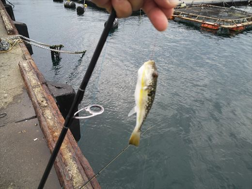 第八回釣り大会城ヶ島 (66)