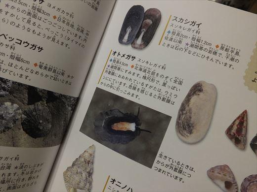 城ヶ島で捕ってきた生き物 (12)