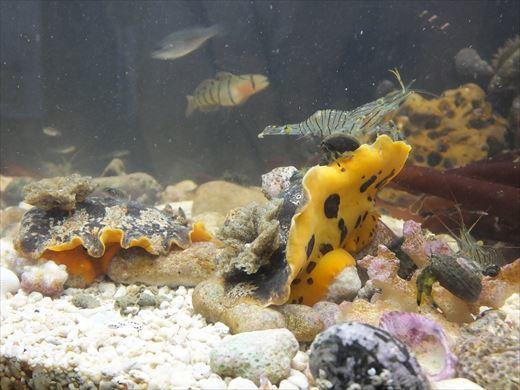 城ヶ島で捕ってきた生き物 (25)