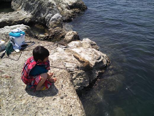 トンビ磯で釣り (19)