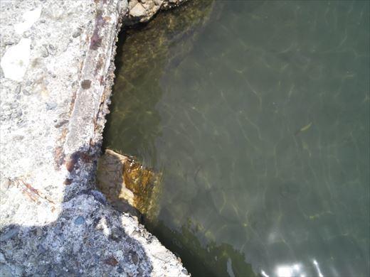 トンビ磯で釣り (24)