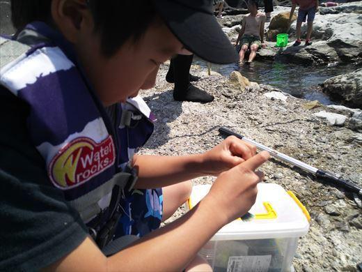 トンビ磯で釣り (27)