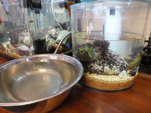 子供水槽水質 (7)