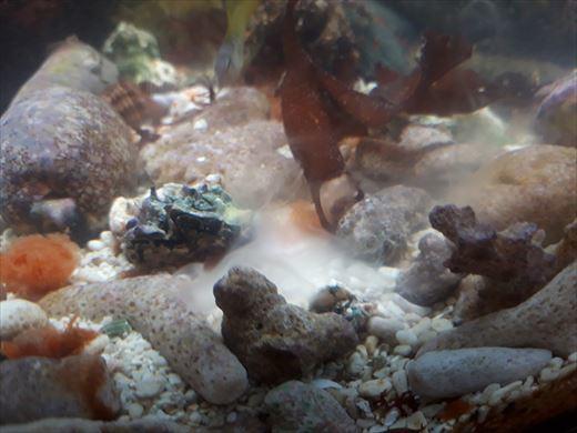 牡蠣は>< (2)