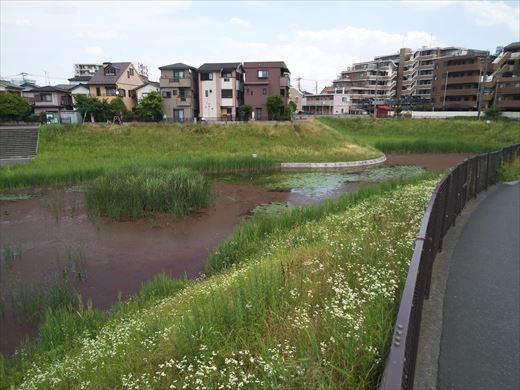 谷塚治水緑地 (7)