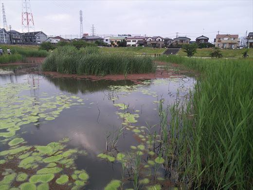 谷塚治水緑地 (17)