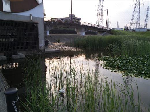 柳島治水緑地 (5)