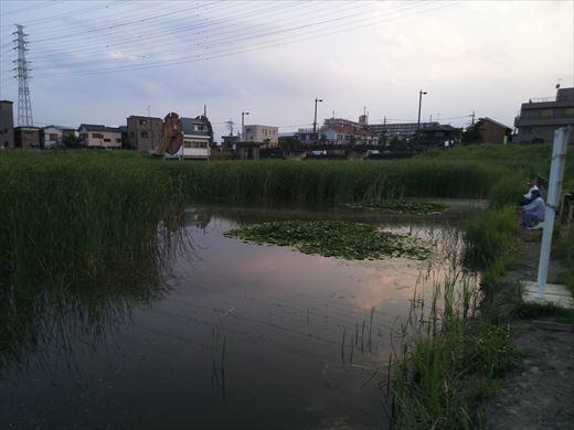 柳島治水緑地 (13)