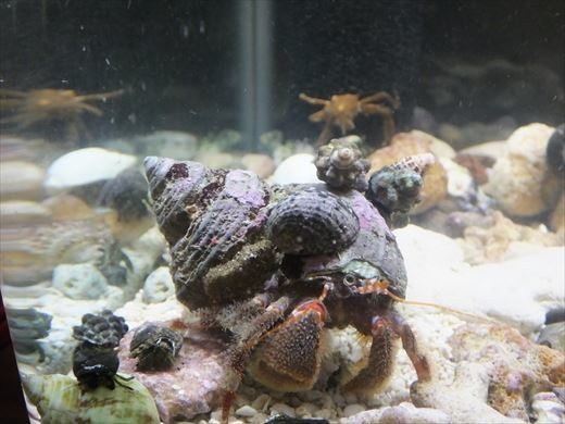 貝殻お気に召さない? (3)