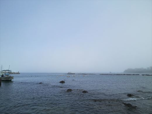 一色海岸でシュノーケルフィッシング (10)