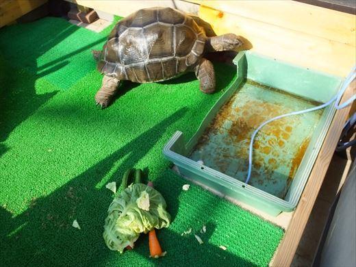 野菜育てる (7)